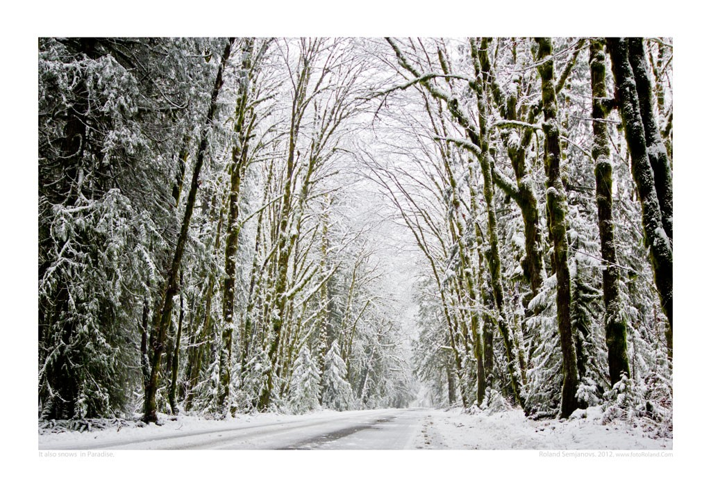 3050-snowsinparadise